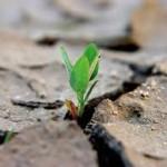 Promuovere benessere nella crisi
