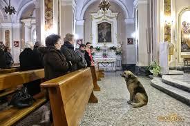 cane chiesa 2