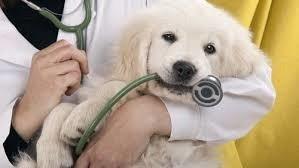 Animali da compagnia e da salute
