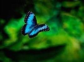 A memoria di farfalla e la tendenza attualizzante