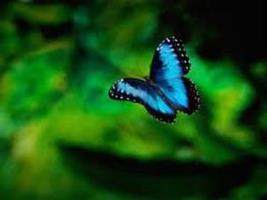 A memoria di farfalla..