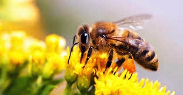 api: amiche del nostro benessere e salute del Pianeta