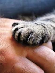 Gli animali: indispensabili compagni di vita.