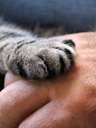 Psy & Pet: animali e psicologia